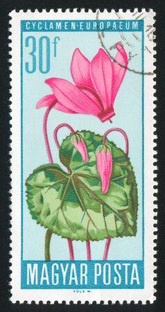 HUNGARY - CIRCA 1967: stamp printed by Hungary, shows Ligularia sibirica, circa 1967 Stock Photo - 11176169