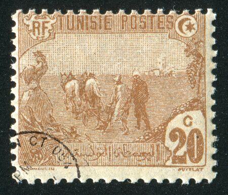 horse cock: TUNISIA - CIRCA 1921: stamp printed by Tunisia, shows Plowing, circa 1921 Stock Photo