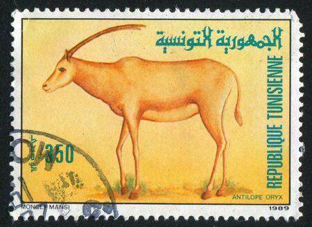 TUNISIA - CIRCA 1989: stamp printed by Tunisia, shows Oryx, circa 1989 photo