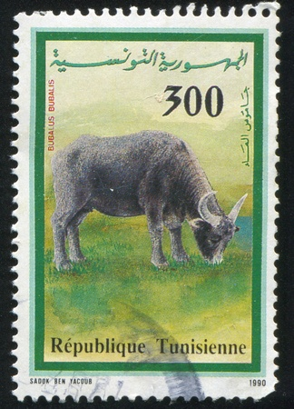 TUNISIA - CIRCA 1990: stamp printed by Tunisia, shows Water Buffalo, circa 1990 photo