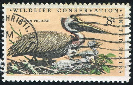 UNITED STATES - CIRCA 1972: stamp printed by United States of America, shows Brown Pelican, circa 1972 photo