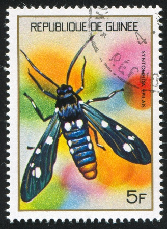 GUINEA CIRCA 1973: stamp printed by Guinea, shows Moth, circa 1973 Stock Photo - 11339516