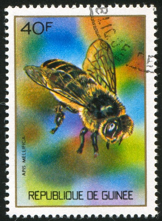 GUINEA CIRCA 1973: stamp printed by Guinea, shows Honey bee, circa 1973 Stock Photo - 11339499