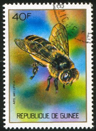GUINEA CIRCA 1973: stamp printed by Guinea, shows Honey bee, circa 1973 Stock Photo - 11339499