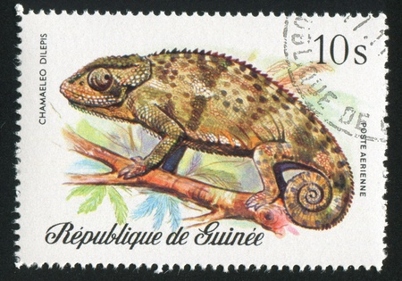GUINEA CIRCA 1977: stamp printed by Guinea, shows Flap-necked chameleon, circa 1977 photo