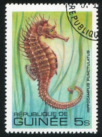 hippocampus: GUINEA CIRCA 1980: stamp printed by Guinea, shows Sea horse, circa 1980