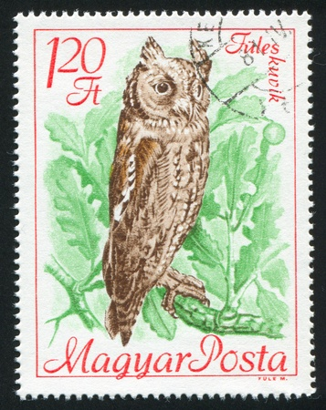 floccus: HUNGARY - CIRCA 1968: stamp printed by Hungary, shows Scops owl, circa 1968 Stock Photo