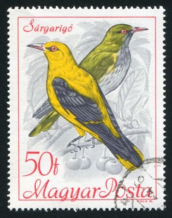 orioles: HUNGARY - CIRCA 1968: stamp printed by Hungary, shows Golden orioles, circa 1968