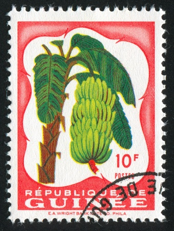 bundle of letters: GUINEA CIRCA 1959: stamp printed by Guinea, shows Bananas, circa 1959 Stock Photo