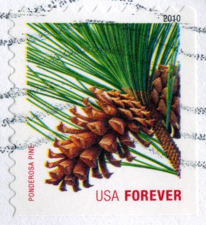 ponderosa: UNITED STATES - CIRCA 2010: stamp printed by United States of America, shows branch and cone of Ponderosa pine, circa 2010