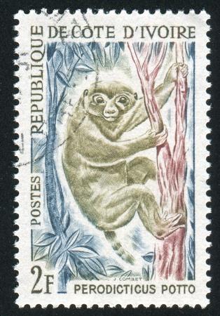 IVORY COAST CIRCA 1964: stamp printed by Ivory Coast, shows Potto, circa 1964 photo