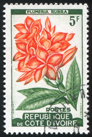 IVORY COAST CIRCA 1962: stamp printed by Ivory Coast, shows Local Plant, circa 1962 photo