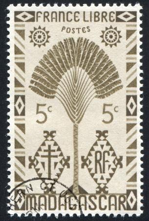 MADAGASCAR CIRCA 1943: stamp printed by Madagascar, shows Traveler's Tree, circa 1943 photo