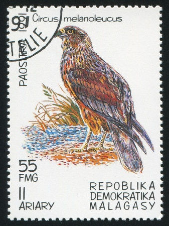 MALAGASY CIRCA 1991: stamp printed by Malagasy, shows Bird, Pied Harrier, circa 1991 photo