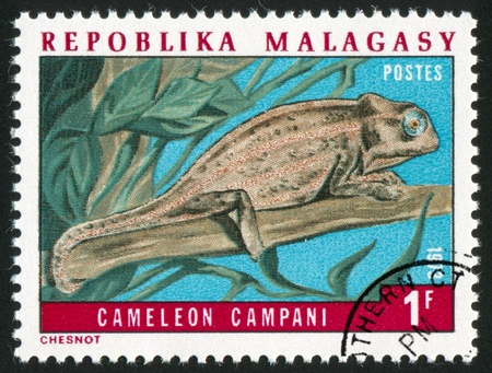 MALAGASY CIRCA 1973: stamp printed by Malagasy, shows Chameleon, circa 1973 photo