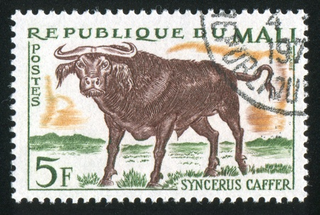 MALI CIRCA 1965: stamp printed by Mali, shows Cape buffalo, circa 1965 Stock Photo - 11893240