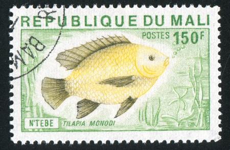 MALI CIRCA 1975: stamp printed by Mali, shows Tilapia, circa 1975 Stock Photo - 11893241