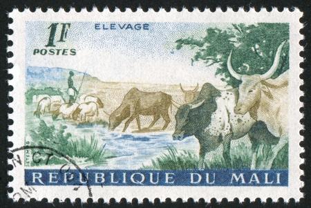 MALI - CIRCA 1961: stamp printed by Mali, shows Cattle, circa 1961 photo