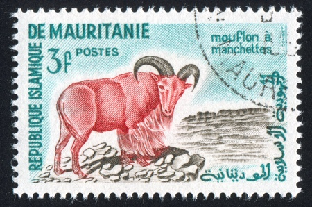 curved leg: MAURITANIA - CIRCA 1961: stamp printed by Mauritania, shows Aoudad, circa 1961