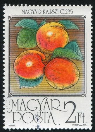 HUNGARY - CIRCA 1986: stamp printed by Hungary, shows Apricots, circa 1986 photo