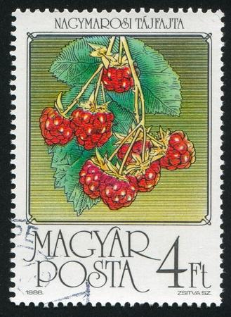 HUNGARY - CIRCA 1986: stamp printed by Hungary, shows Raspberries, circa 1986 photo