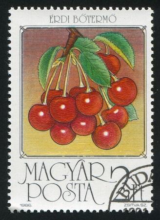 HUNGARY - CIRCA 1986: stamp printed by Hungary, shows Sour cherries, circa 1986 photo