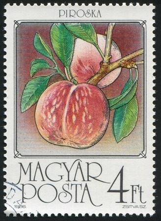 HUNGARY - CIRCA 1986: stamp printed by Hungary, shows Peaches, circa 1986 photo