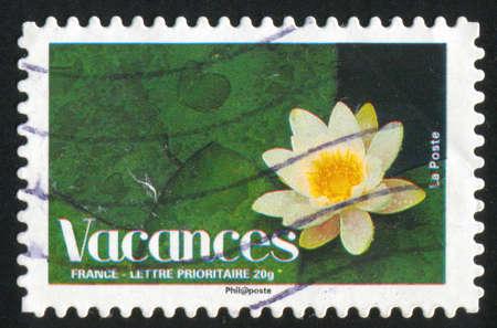 FRANCE - CIRCA 2008: stamp printed by France, shows lotus, circa 2008 photo