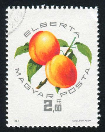 agri: HUNGARY – CIRCA 1964: stamp printed by Hungary, shows Peaches Elberta , circa 1967
