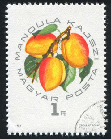 HUNGARY – CIRCA 1964: stamp printed by Hungary, shows Peaches Mandula, circa 1964 Banco de Imagens - 12396579