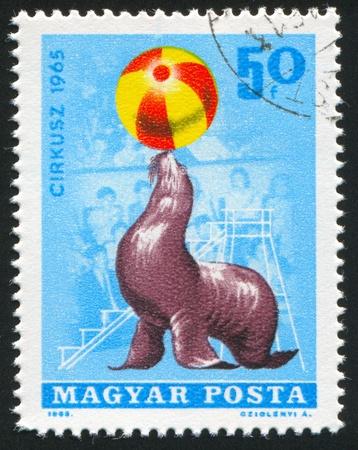 historic vintage: HUNGARY   CIRCA 1965: stamp printed by Hungary, shows  seal balancing ball in circus, circa 1965
