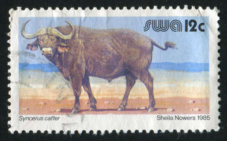 SOUTH WEST AFRICA - CIRCA 1985: stamp printed by South West Africa, shows African buffalo, circa 1985 photo