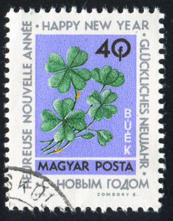 HUNGARY CIRCA 1963: stamp printed by Hungary, shows four-leaf clover,  circa 1963 Stock Photo - 12576135