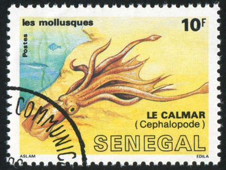 raptorial: SENEGAL - CIRCA 1988: stamp printed by Senegal, shows Squid, circa 1988