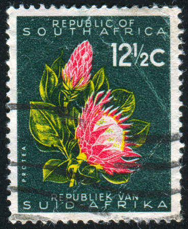 SOUTH AFRICA - CIRCA 1970: stamp printed by South Africa, shows Protea flower, circa 1970 Stock Photo - 12576682