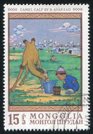 MONGOLIA - CIRCA 1968: stamp printed by Mongolia, shows Camel calf, by B. Avarzad, circa 1968 photo