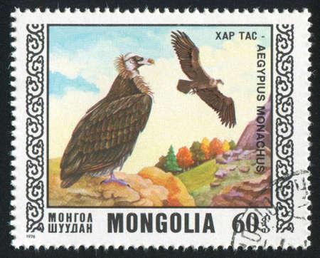 MONGOLIA - CIRCA 1976: stamp printed by Mongolia, shows bird, Black vulture, circa 1976 photo