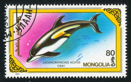 MONGOLIA - CIRCA 1990: stamp printed by Mongolia, shows dolphin, circa 1990 Stock Photo - 12594497