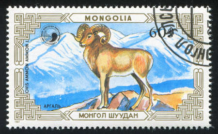 MONGOLIA - CIRCA 1987: stamp printed by Mongolia, shows ovis, circa 1987 photo