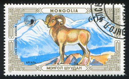 MONGOLIA - CIRCA 1987: stamp printed by Mongolia, shows ovis, circa 1987 photo
