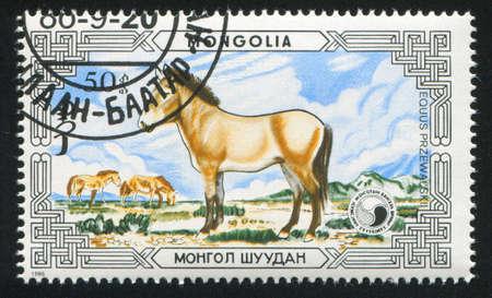 mongolia horse: MONGOLIA - CIRCA 1986: stamp printed by Mongolia, shows Przewalski horse, circa 1986