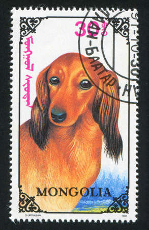 MONGOLIA - CIRCA 1991: stamp printed by Mongolia, shows dachshund dog, circa 1991 photo