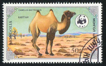 MONGOLIA - CIRCA 1985: stamp printed by Mongolia, shows camel, circa 1985
