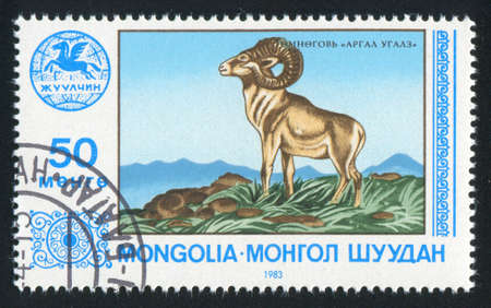 ovis: MONGOLIA - CIRCA 1983: stamp printed by Mongolia, shows ovis, circa 1983 Editorial