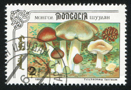 MONGOLIA - CIRCA 1990: stamp printed by Mongolia, shows mushroom, circa 1990 photo