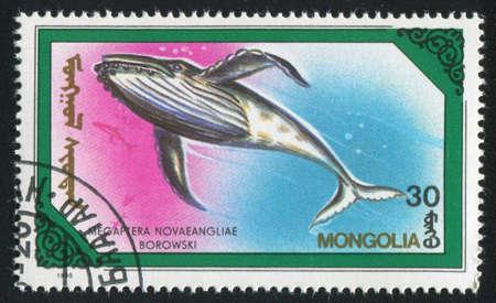 megaptera novaeangliae: MONGOLIA - CIRCA 1990: stamp printed by Mongolia, shows whale Megaptera novaeangliae, circa 1990