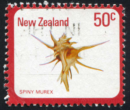 murex shell: NEW ZEALAND - CIRCA 1978: stamp printed by New Zealand, shows sea shell, Spiny murex, circa 1978
