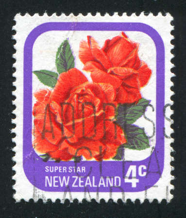 NEW ZEALAND - CIRCA 1975: stamp printed by New Zealand, shows flower  Rose Super Star, circa 1975 Stock Photo - 12588753