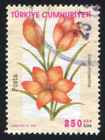 TURKEY - CIRCA 2000: stamp printed by Turkey, shows flower, circa 2000. photo
