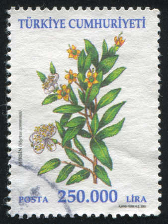 TURKEY - CIRCA 2001: stamp printed by Turkey, shows flower, circa 2001. photo